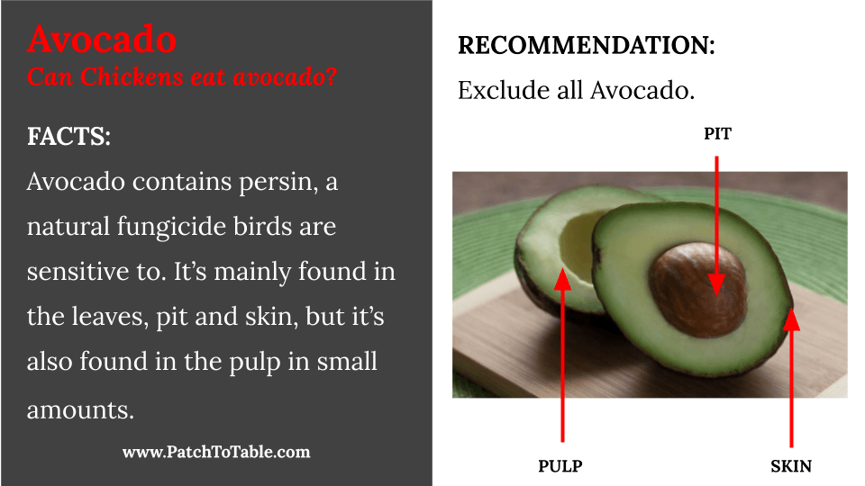 Can chickens eat Avocado?