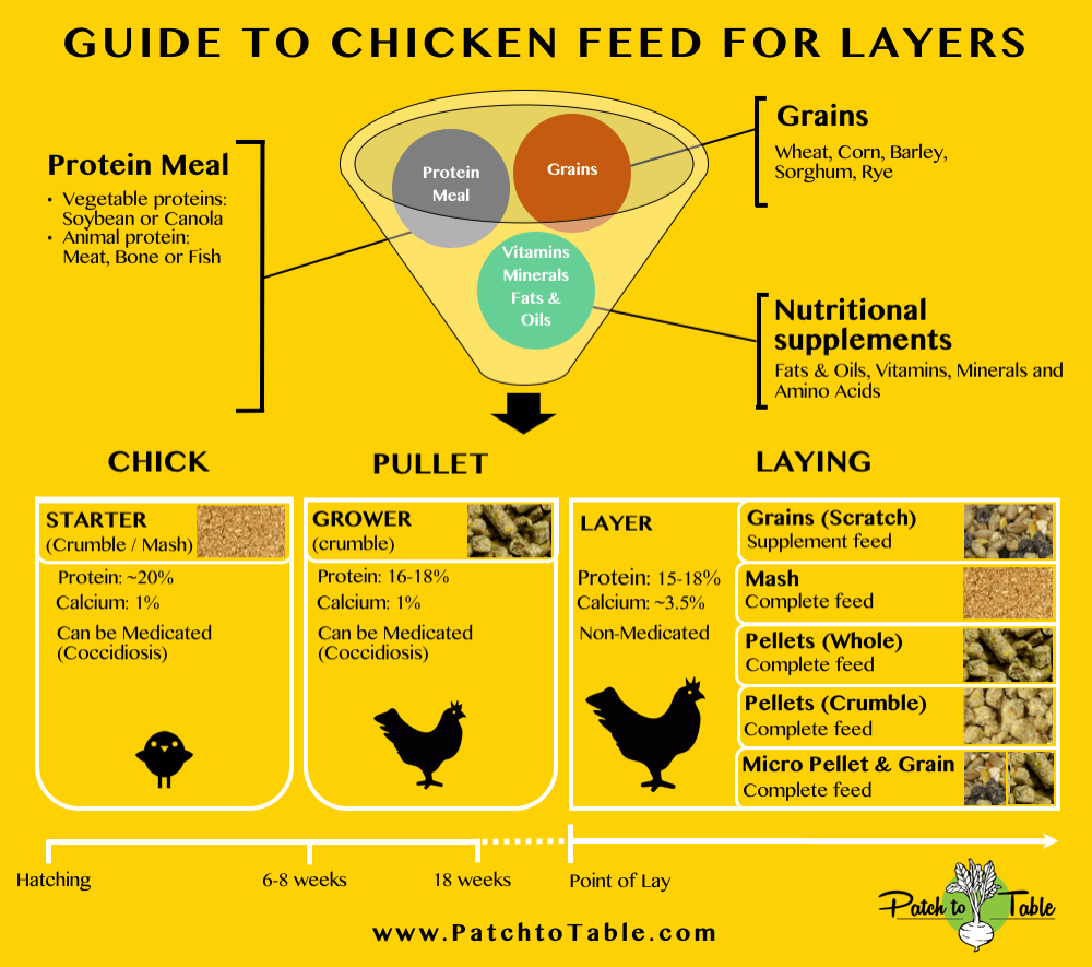 So what's the best type of feed for backyard chickens – pellets, mash,  crumble or whole grains?