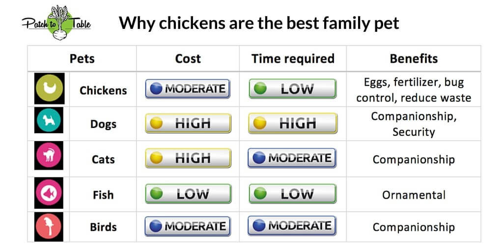why chickens are the best family pet